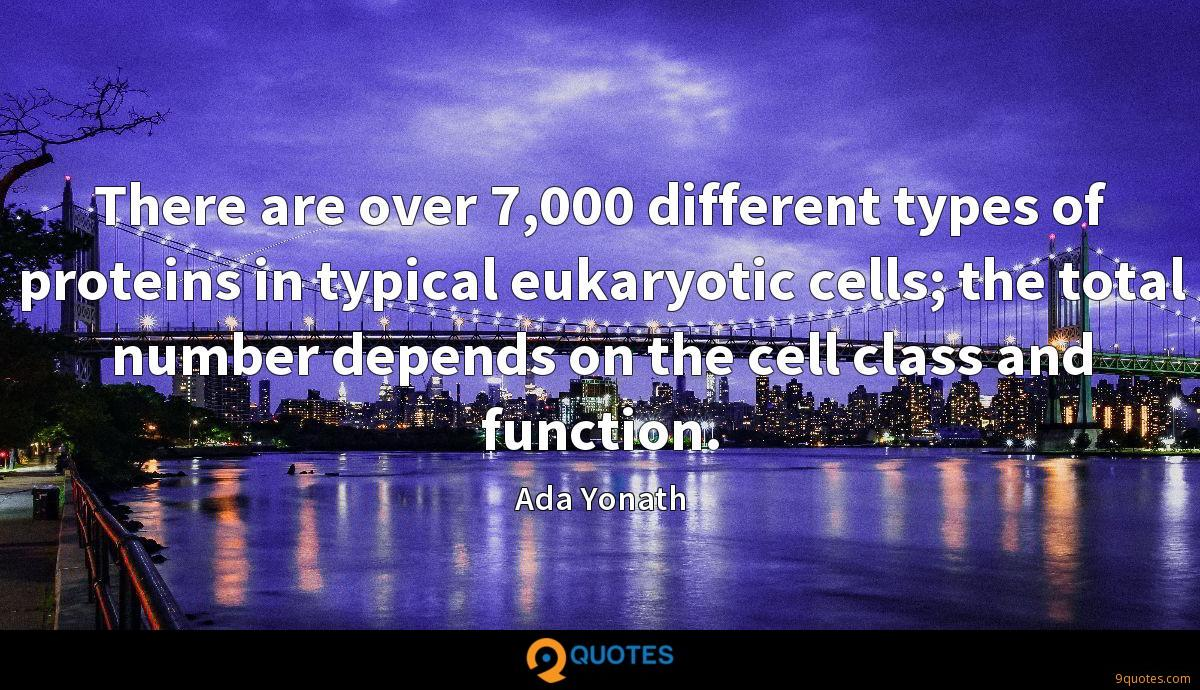 There are over 7,000 different types of proteins in typical eukaryotic cells; the total number depends on the cell class and function.