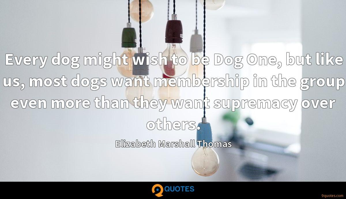 Every dog might wish to be Dog One, but like us, most dogs want membership in the group even more than they want supremacy over others.