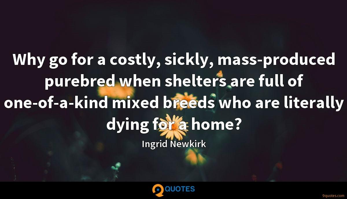Why go for a costly, sickly, mass-produced purebred when shelters are full of one-of-a-kind mixed breeds who are literally dying for a home?