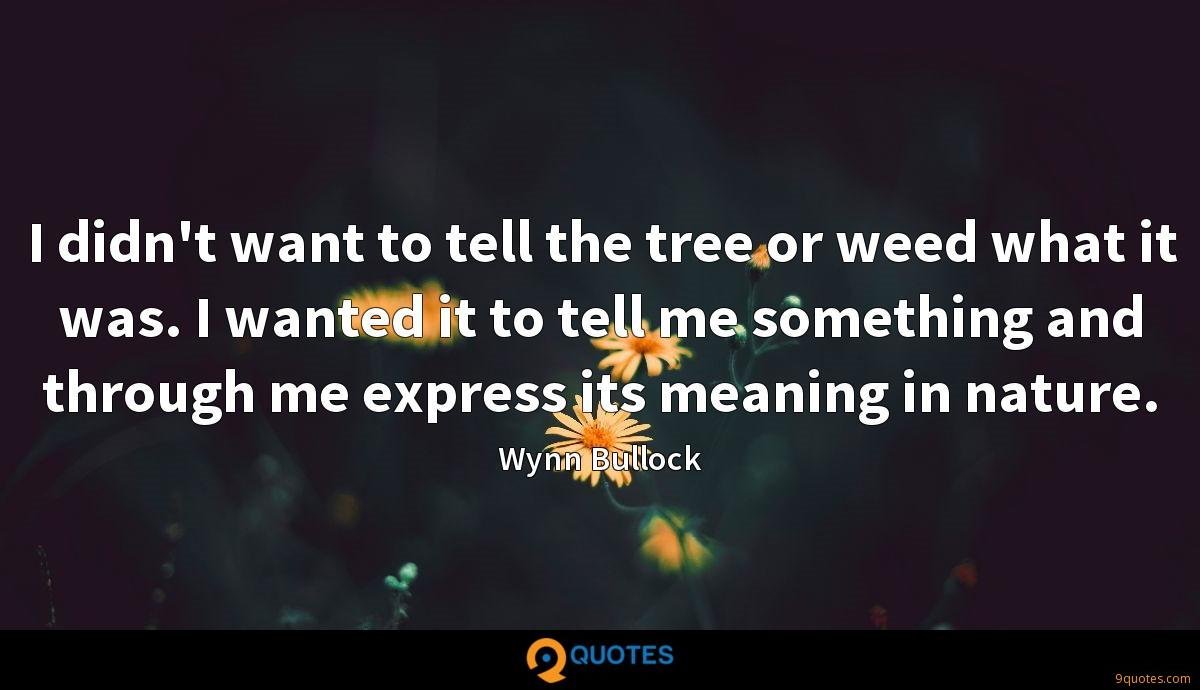 I didn't want to tell the tree or weed what it was. I wanted it to tell me something and through me express its meaning in nature.